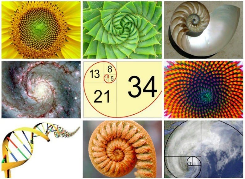 Fibonacci-life